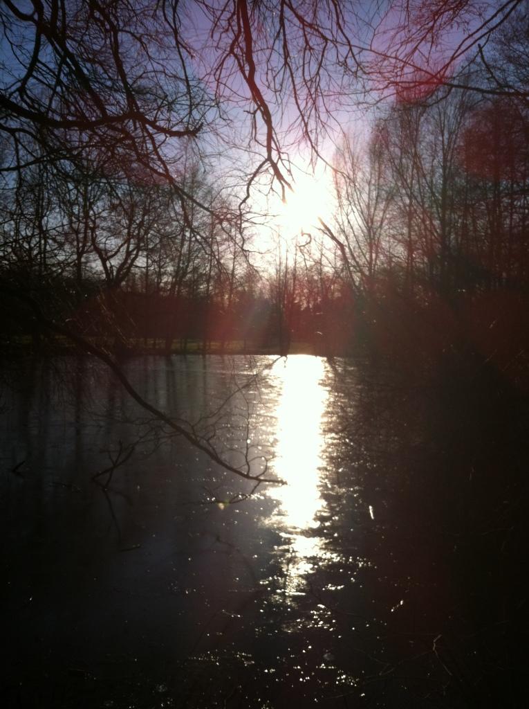 Teich im Gehege