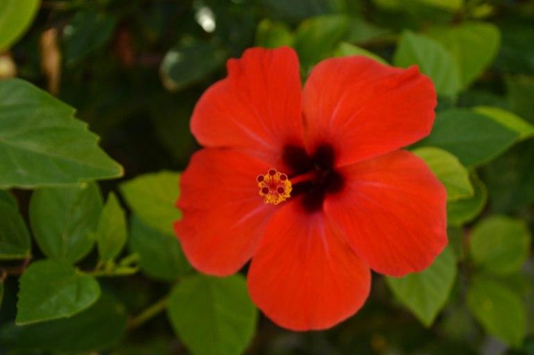 Farbkleckse - Rotkäppchen
