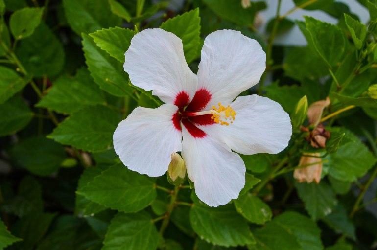 Farbkleckse - Die reine Weiße