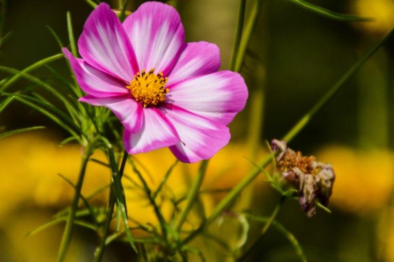 Farbkleckse - Die Lila - Launige
