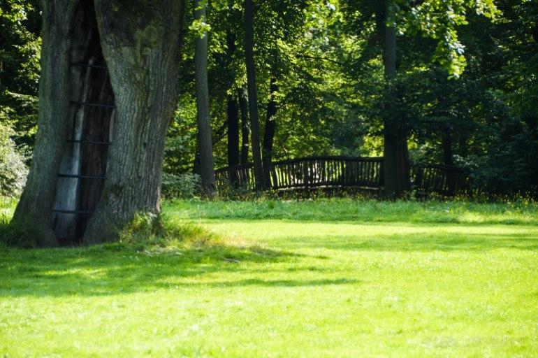 Jenischpark - älteste Baum
